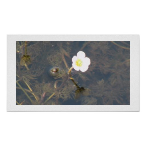 Beaver Dam Slough Flora Flowers Plants Botany Posters