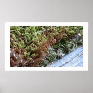 Beaver Dam Slough Fungi Moss Mushroom Plant Botany Print