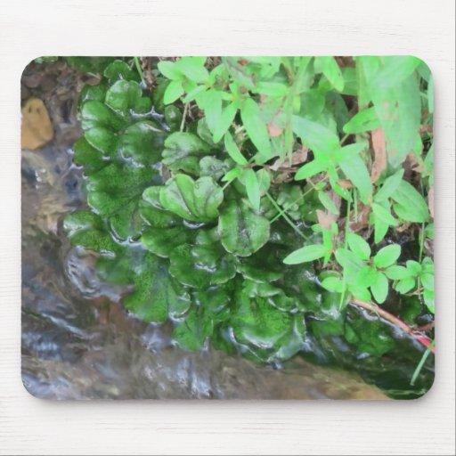 Beaver Dam Slough ID Aquatic Plants Animal Water Mousepads