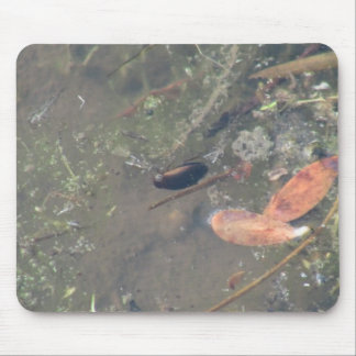 Beaver Dam Slough ID Aquatic Plants Animal Water Mouse Pad