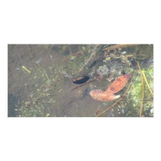Beaver Dam Slough ID Aquatic Plants Animal Water Customized Photo Card