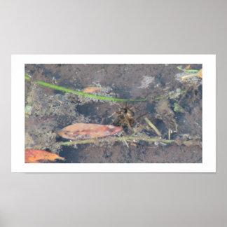Beaver Dam Slough ID Insects Arachnids Bugs Fauna Print