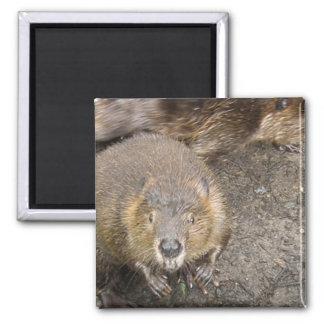Beaver Design Magnet