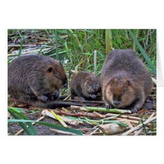 Beaver Family Greeting Cards