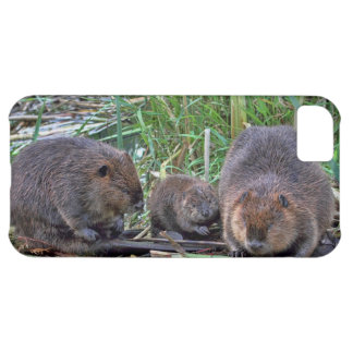 Beaver Family iPhone 5C Covers
