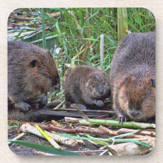 Beaver Family Drink Coaster