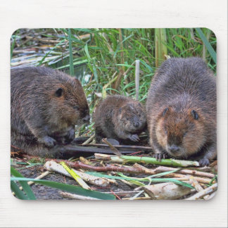 Beaver Family Mouse Pads