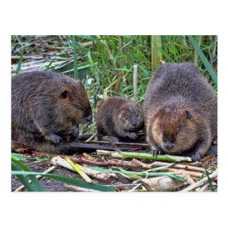 Beaver Family Post Cards
