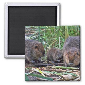 Beaver Family Square Magnet