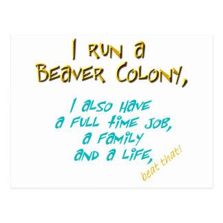 beaver leader turquoise postcard