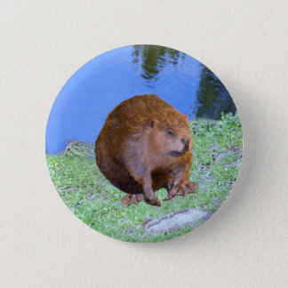 Beaver (Oregon New York) 2 Z .jpg 6 Cm Round Badge