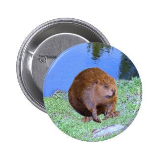 Beaver (Oregon New York) 2 Z .jpg 6 Cm Round Badge