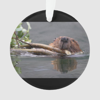 Beaver Working
