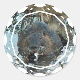 Beavers Habitat Stickers