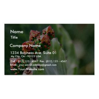 Beavertail Cactus Business Card Templates