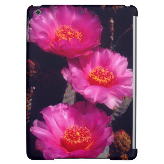 Beavertail Cactus Flowers 2