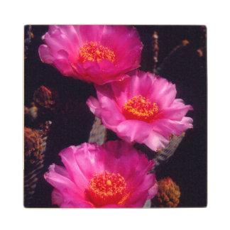 Beavertail Cactus Flowers 2 Wood Coaster