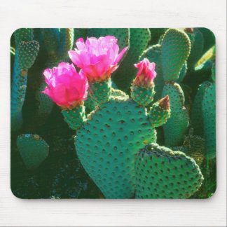 Beavertail Cactus Flowers Mouse Mat