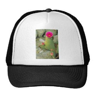 Beavertail cactus trucker hats