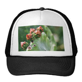 Beavertail Cactus Hat