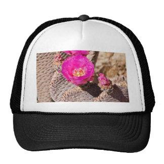 Beavertail Cactus Trucker Hat