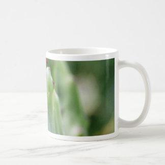 Beavertail Cactus Coffee Mugs