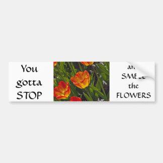 Bed of Orange Tulips Bumper Sticker