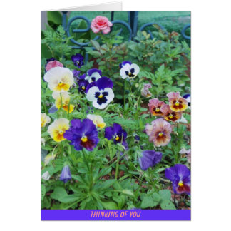 Bed of Pansies, THINKING OF YOU Note Card