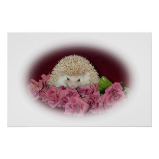 Bed of Roses Hedgehog Poster