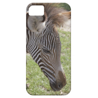 Bedfordshire, England iPhone 5 Covers