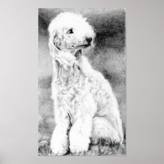 Bedlington Terrier Dog Portrait Poster Print