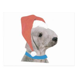 Bedlington Terrier Santa Hat Postcard