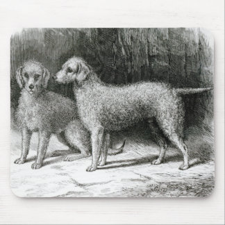 Bedlington Terriers- Mr. F. Armstrong's Mouse Pad