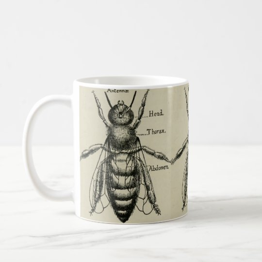 Bee Anatomy Illustration - Vintage Design Mug
