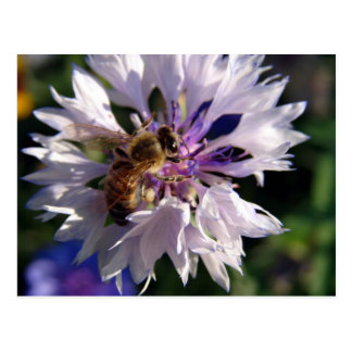 Bee and Blue Flower Post Card