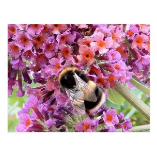 Bee and buddleia postcard