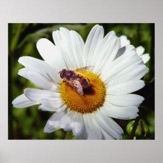 Bee and Daisy Print