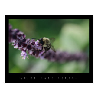 BEE AND FLOWER POSTERS