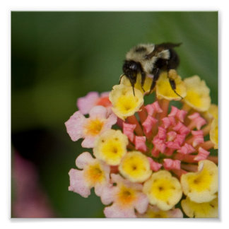 Bee and Flower Poster