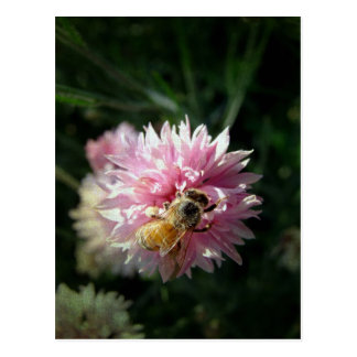 Bee and Pink Flower Postcards