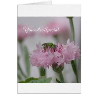 Bee and Pink Flowers   Photo Card