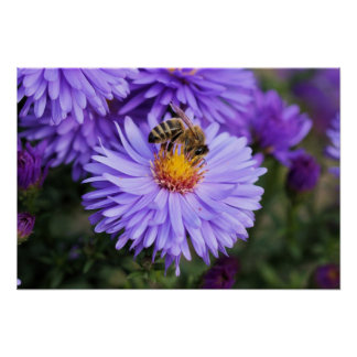 Bee and purple flower scenery poster