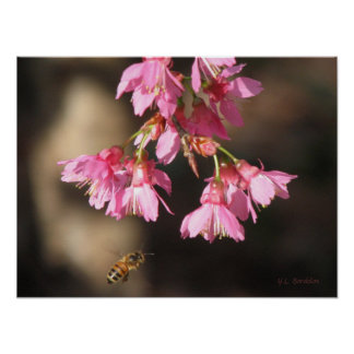 Bee and Taiwan Cherry Poster