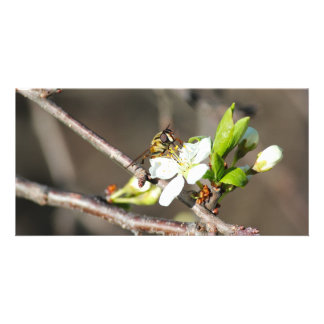 Bee & Apple Tree Blossom - Photo Cards