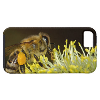 Bee at Work iPhone 5 Case