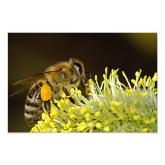 Bee at Work Photo Print