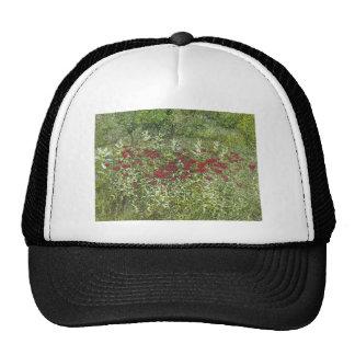 Bee Balm (Bergamont) in August Hat