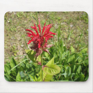 Bee Balm FLower Mouse Mat