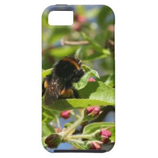 Bee bum Iphone Case iPhone 5 Cases