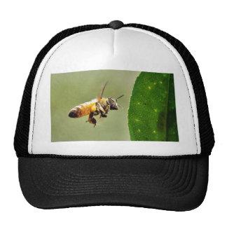 Bee Buzzing Around The Myer Lemon Tree On My Balco Trucker Hat